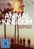 Animal Kingdom: Die komplette 1. Staffel DVD-Box