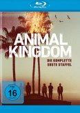 Animal Kingdom: Die komplette 1. Staffel - 2 Disc Bluray
