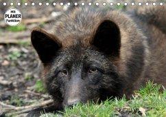 Im Rudel Zuhause - Der Wolf (Tischkalender 2019 DIN A5 quer)