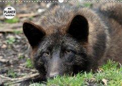 Im Rudel Zuhause - Der Wolf (Wandkalender 2019 DIN A3 quer)