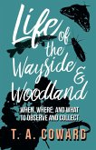 Life of the Wayside and Woodland - When, Where, and What to Observe and Collect (eBook, ePUB)