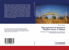 Management of Resistant Phalaris minor in Wheat