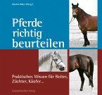 Pferde richtig beurteilen (eBook, ePUB)