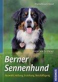 Berner Sennenhund (Mängelexemplar)
