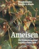 Ameisen (eBook, PDF)