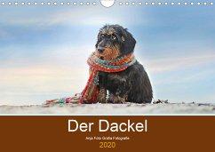 Der Dackel (Wandkalender 2019 DIN A4 quer)