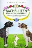 Bachblüten für die Hundeseele
