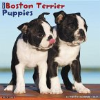 Just Boston Terrier Puppies 2019 Wall Calendar (Dog Breed Calendar)