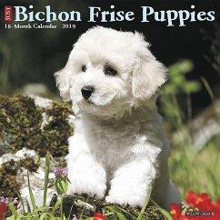 Bichon Frise Puppies 2019 Wall Calendar (Dog Breed Calendar) - Willow Creek Press