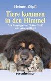 Tiere kommen in den Himmel (erweiterte Neuauflage) (eBook, ePUB)