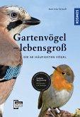 Gartenvögel lebensgroß (eBook, PDF)