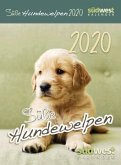 Süße Hundewelpen 2020 Abreißkalender