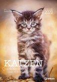 Katzen Quizkalender 2020