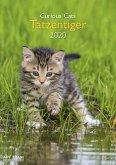 Tatzentiger 2020 Wandkalender