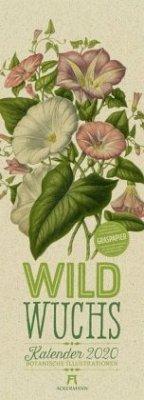 Wildwuchs - Botanische Illustrationen - Graspapier-Kalender 2020 - Pratt, Anne