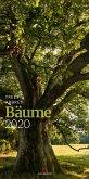 Bäume 2020