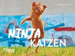 Ninjakatzen - hiroyuki, hisakata