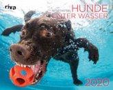 Hunde unter Wasser 2020