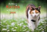 DuMonts Katzen-Kalender 2020