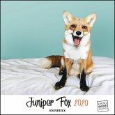 Juniper Fox 2020 - Ein Fuchs zum Verlieben - Tierkalender mit dem berühmtesten Fuchs im Internet - Quadratformat 24 x 24