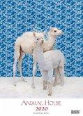 Animal House Kalender 2020 - DUMONT Tier-Kalender - Foto-Kunst - Poster-Format 49,5 x 68,5 cm