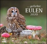 Geliebte Eulen 2020 - DuMont Wandkalender