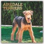 Airedale Terriers 2020 - 18-Monatskalender mit freier DogDays-App