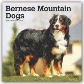 Bernese Mountain Dogs - Berner Sennenhunde 2020 - 18-Monatskalender mit freier DogDays-App
