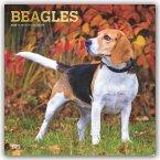 Beagles 2020 - 18-Monatskalender mit freier DogDays-App