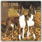 Boxers - Boxer 2020 - 18-Monatskalender mit freier DogDays-App