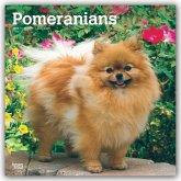 Pomeranians - Zwergspitze 2020 - 18-Monatskalender mit freier DogDays-App