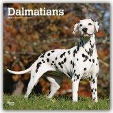 Dalmatians - Dalmatiner 2020 - 18-Monatskalender mit freier DogDays-App