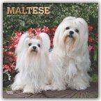 Maltese - Malteser 2020 - 18-Monatskalender mit freier DogDays-App