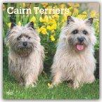 Cairn Terriers - Cairn Terrier 2020 - 18-Monatskalender mit freier DogDays-App