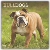 Bulldogs - Bulldoggen 2020 - 18-Monatskalender mit freier DogDays-App