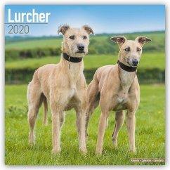 Lurchers - Lurcher 2020