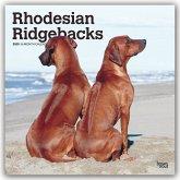 Rhodesian Ridgebacks - Afrikanischer Löwenhund 2020 - 18-Monatskalender mit freier DogDays-App