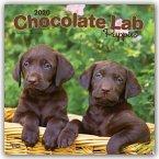 Chocolate Labrador Retriever Puppies - Braune Labradorwelpen 2020 - 18-Monatskalender mit freier DogDays-App