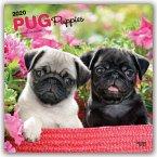 Pug Puppies - Mopswelpen 2020 - 18-Monatskalender mit freier DogDays-App