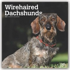 Wirehaired Dachshunds - Rauhhaardackel 2020 - BrownTrout Publisher