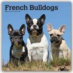 French Bulldogs - Französische Bulldoggen 2020 - 18-Monatskalender mit freier DogDays-App