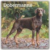 Dobermans International - Dobermänner 2020 - 18-Monatskalender mit freier DogDays-App