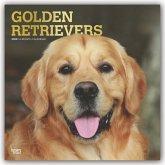 Golden Retrievers 2020 - 18-Monatskalender mit freier DogDays-App