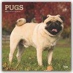 Pugs - Möpse 2020 - 18-Monatskalender mit freier DogDays-App