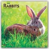 Rabbits - Kaninchen 2020 - 18-Monatskalender