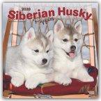 Siberian Husky Puppies - Husky-Welpen 2020 - 18-Monatskalender mit freier DogDays-App