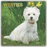 West Highland White Terriers - Westies 2020 - 18-Monatskalender mit freier DogDays-App