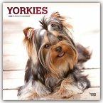 Yorkshire Terriers - Yorkshire Terrier 2020 - 18-Monatskalender mit freier DogDays-App