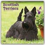 Scottish Terriers - Scottish Terrier 2020 - 18-Monatskalender mit freier DogDays-App