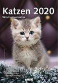 Wochenkalender Katzen 2020